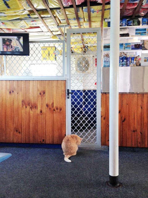 You might be lucky to catch Flinders the ferry cat on a Wanggoolba Creek barge