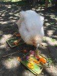 This bunny image courtesy of Tripadvisor